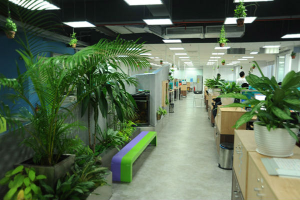 Thêm một số cây vào văn phòng bạn sẽ cảm thấy hơn, thoải mái hơn