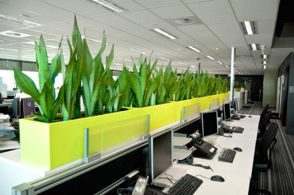 Việc trang trí văn phòng bằng cây xanh ngày càng được ưa chuộng