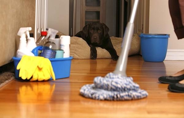 Kê gọn đồ đạc trước khi hút bụi hoặc lau sàn nhà